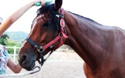 mane comb for horse