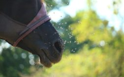 best horse fly mask